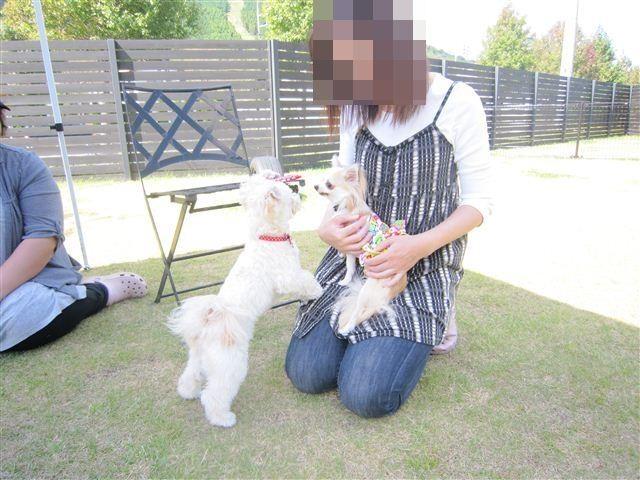 f:id:yasukazu01:20121003112147j:image