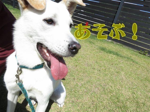 f:id:yasukazu01:20121003114225j:image