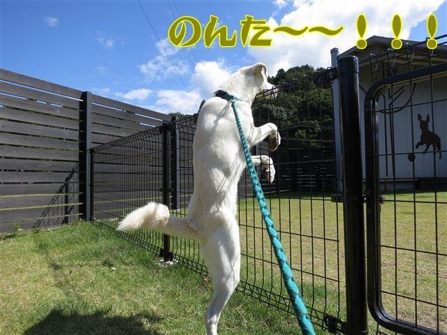 f:id:yasukazu01:20121003114246j:image