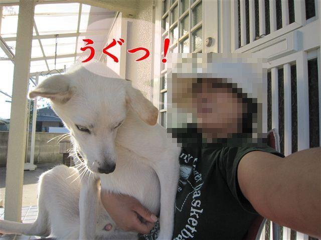 f:id:yasukazu01:20121004161658j:image