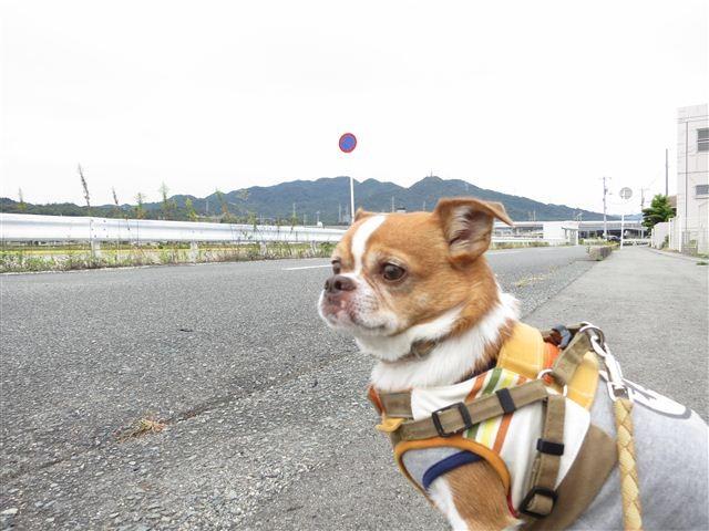 f:id:yasukazu01:20121006101820j:image