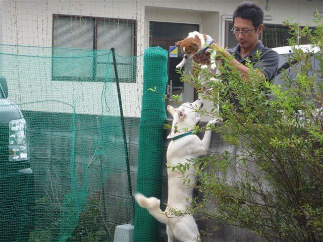 f:id:yasukazu01:20121006120724j:image