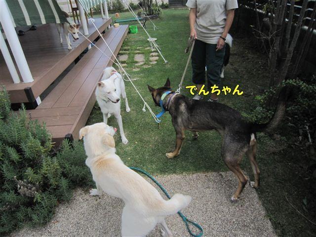 f:id:yasukazu01:20121008160822j:image