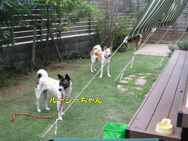 f:id:yasukazu01:20121008162311j:image