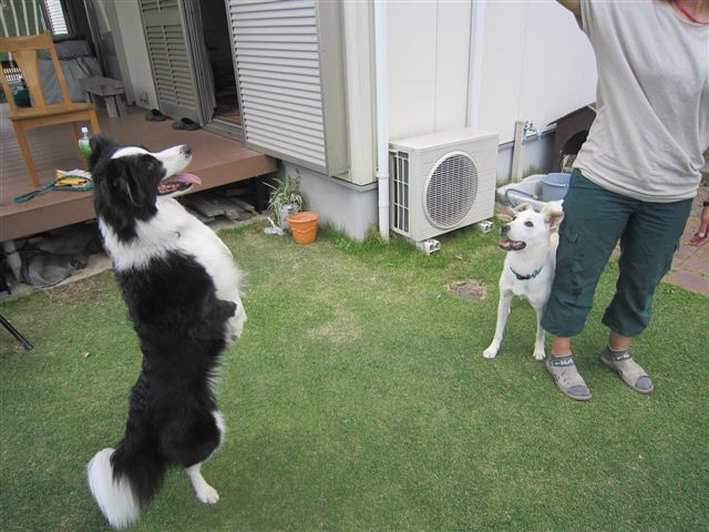 f:id:yasukazu01:20121008162345j:image