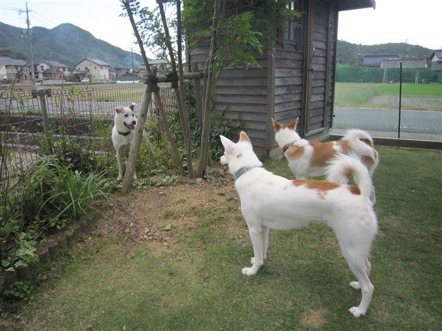 f:id:yasukazu01:20121008162938j:image