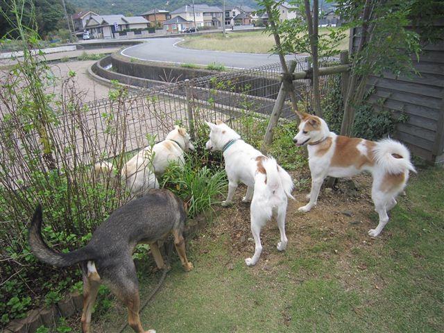f:id:yasukazu01:20121008163040j:image