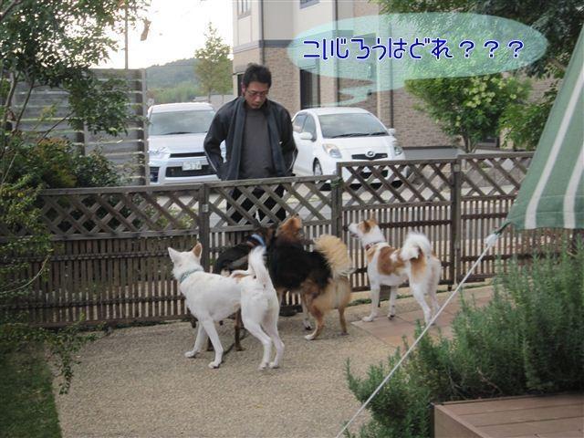 f:id:yasukazu01:20121008163954j:image