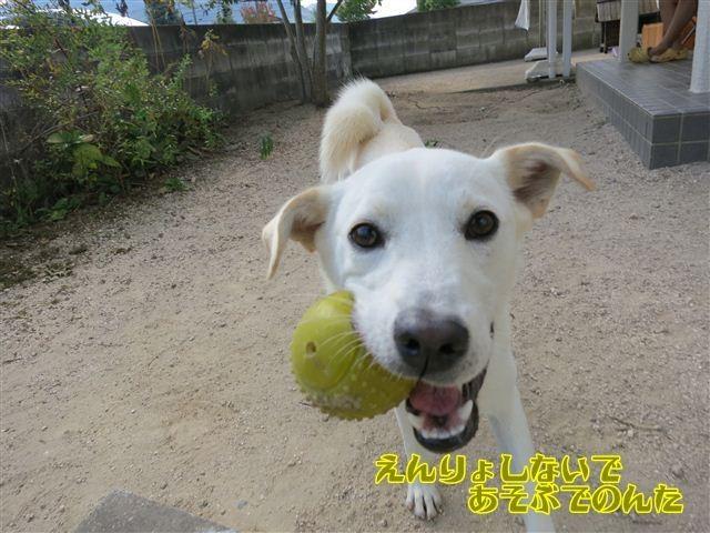 f:id:yasukazu01:20121010143927j:image