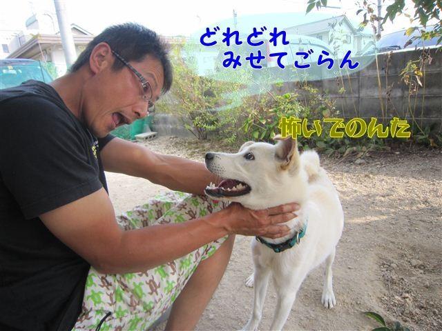 f:id:yasukazu01:20121010144957j:image