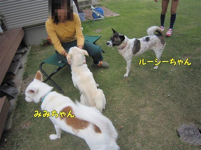 f:id:yasukazu01:20121014160654j:image