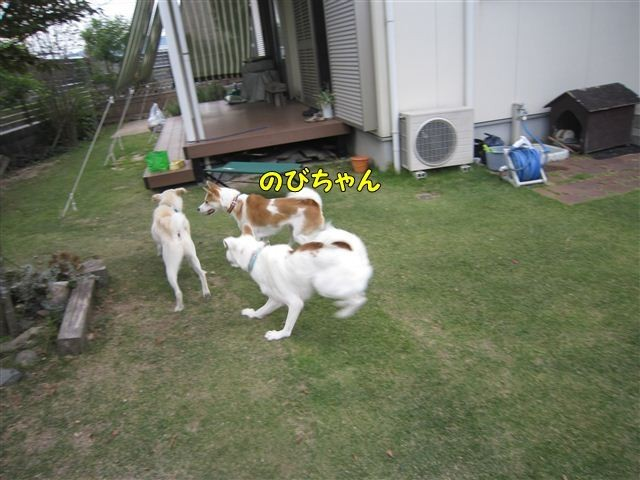 f:id:yasukazu01:20121014160816j:image