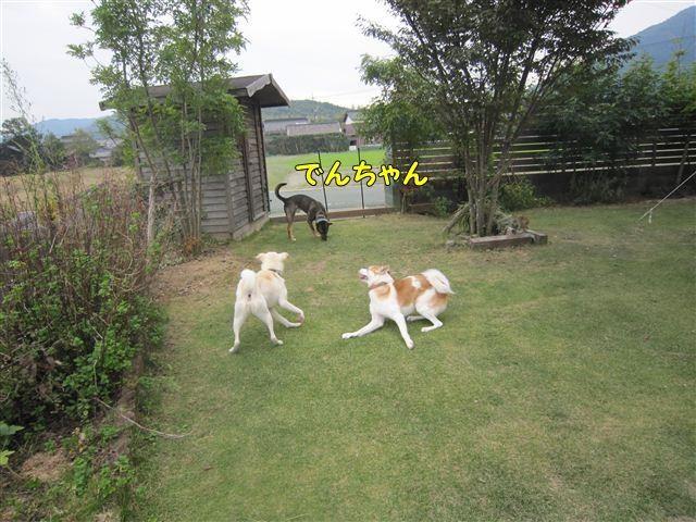 f:id:yasukazu01:20121014161222j:image