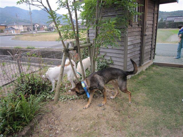 f:id:yasukazu01:20121014162639j:image