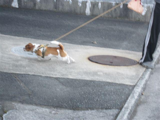 f:id:yasukazu01:20121019164757j:image