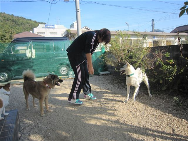f:id:yasukazu01:20121021153050j:image