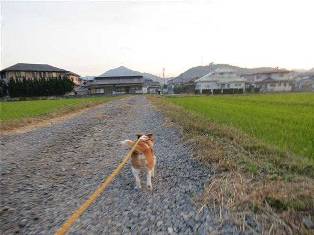 f:id:yasukazu01:20121026170659j:image