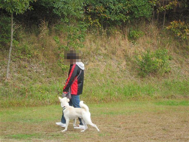 f:id:yasukazu01:20121031131652j:image