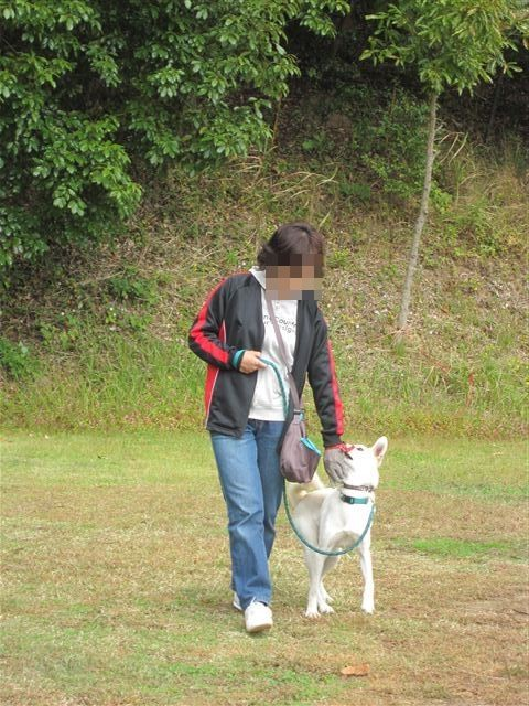 f:id:yasukazu01:20121031131703j:image