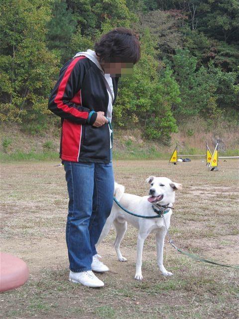 f:id:yasukazu01:20121031141522j:image