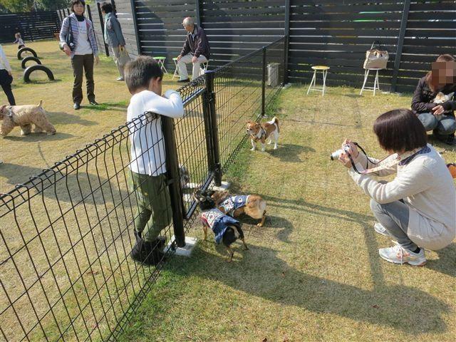 f:id:yasukazu01:20121103102122j:image