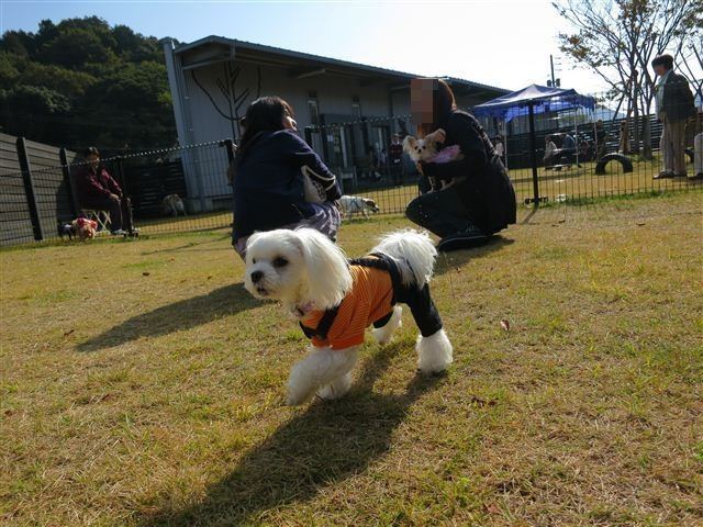 f:id:yasukazu01:20121103102356j:image