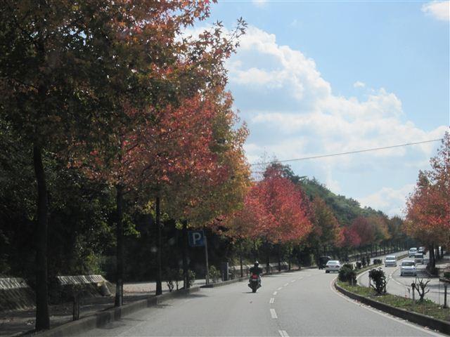f:id:yasukazu01:20121103114144j:image