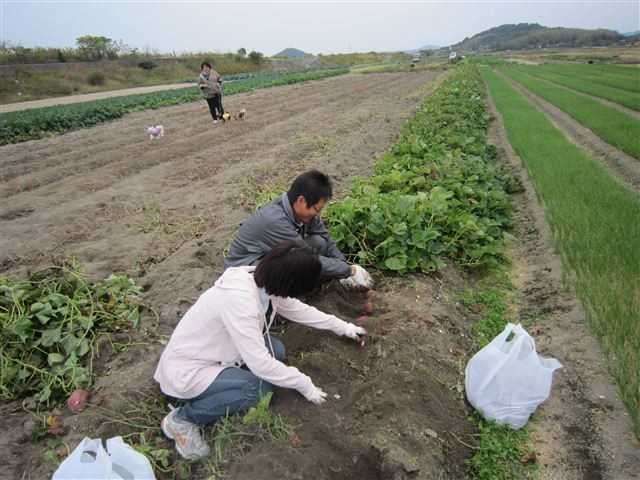 f:id:yasukazu01:20121104143845j:image