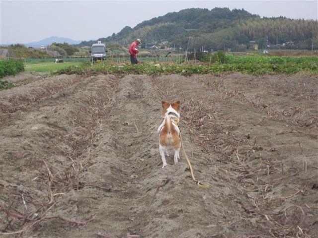 f:id:yasukazu01:20121104152811j:image