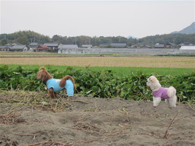 f:id:yasukazu01:20121104152918j:image