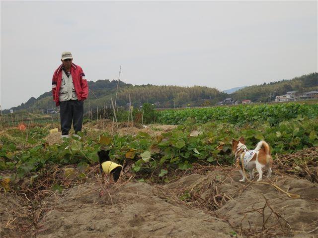 f:id:yasukazu01:20121104152926j:image