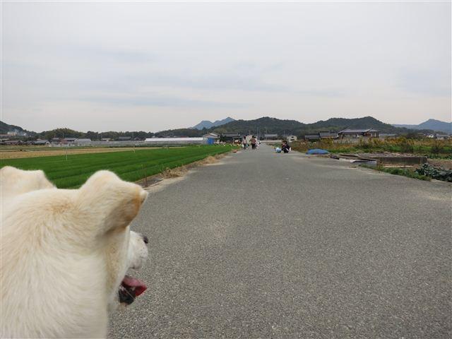 f:id:yasukazu01:20121104153613j:image