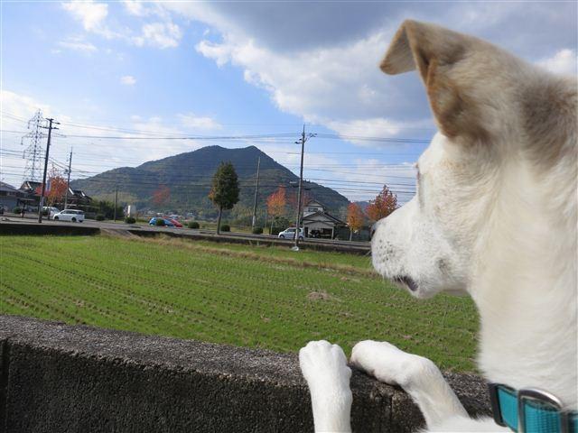 f:id:yasukazu01:20121112103922j:image
