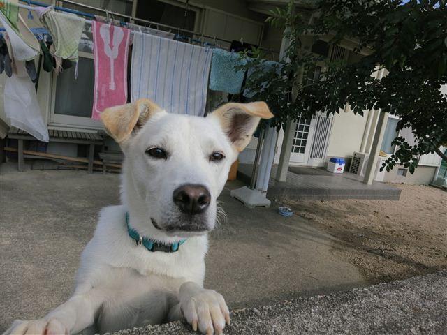 f:id:yasukazu01:20121112104023j:image