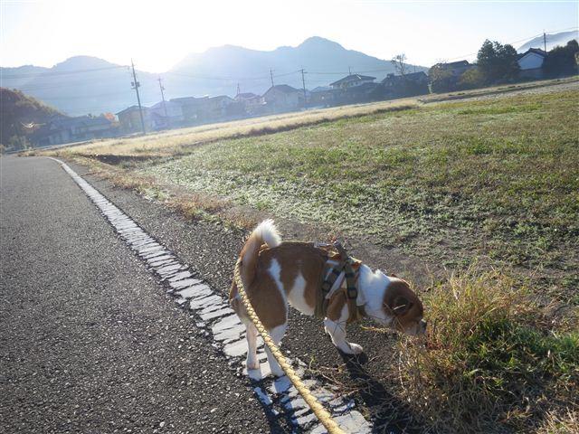 f:id:yasukazu01:20121116081623j:image