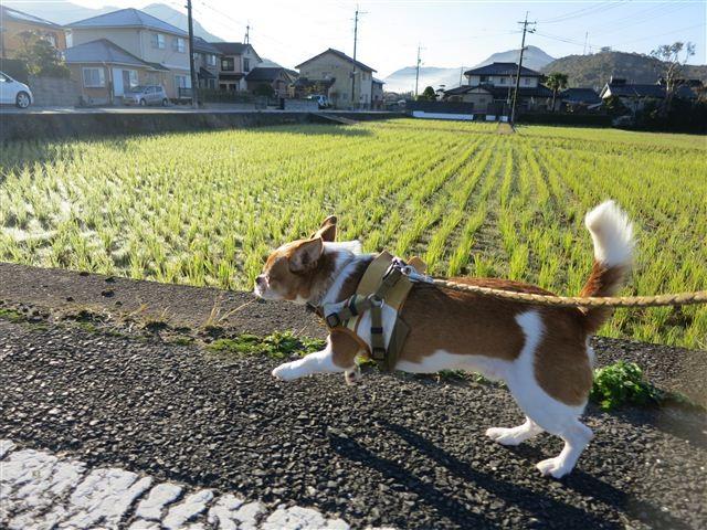 f:id:yasukazu01:20121116081835j:image
