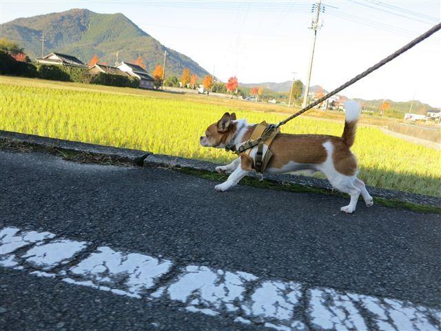 f:id:yasukazu01:20121116081848j:image