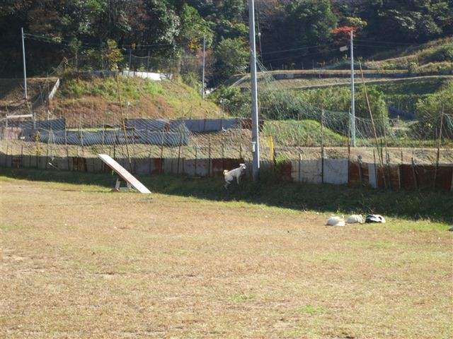 f:id:yasukazu01:20121116125013j:image
