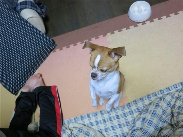 f:id:yasukazu01:20121117191424j:image