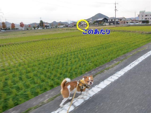 f:id:yasukazu01:20121119162620j:image