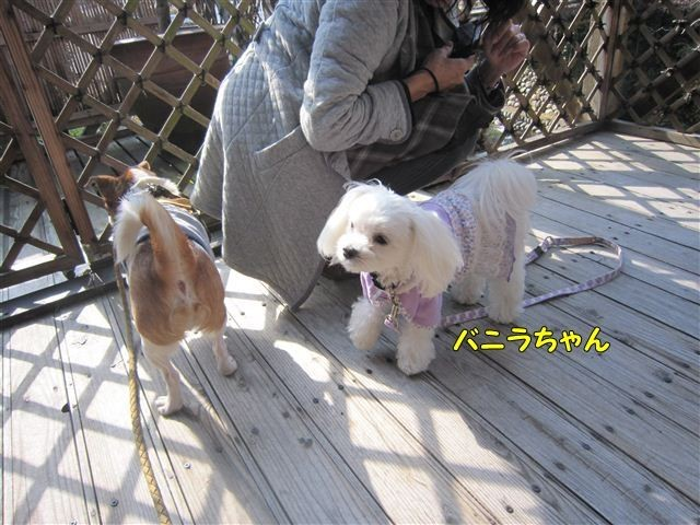 f:id:yasukazu01:20121125120845j:image