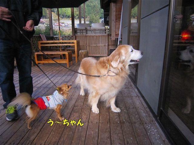 f:id:yasukazu01:20121125121708j:image