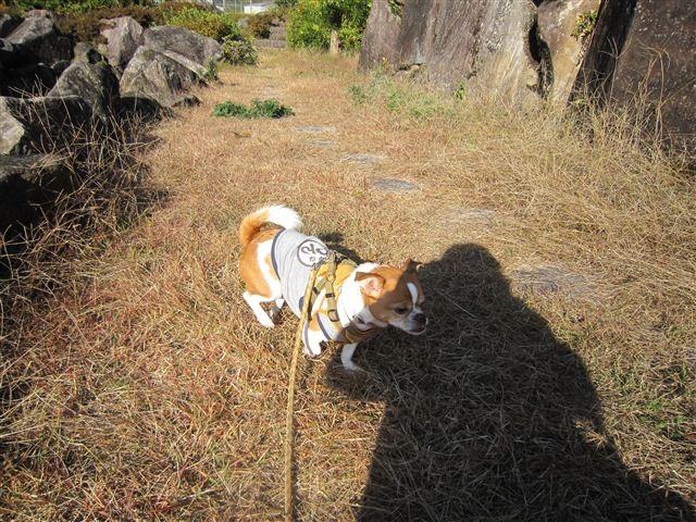 f:id:yasukazu01:20121125142520j:image