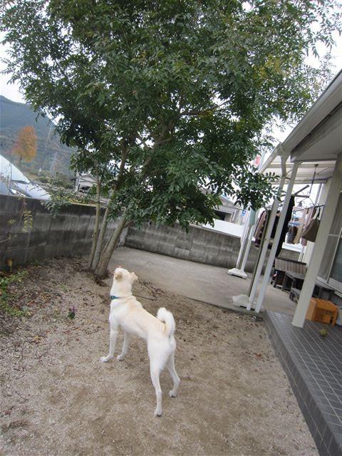 f:id:yasukazu01:20121130130524j:image