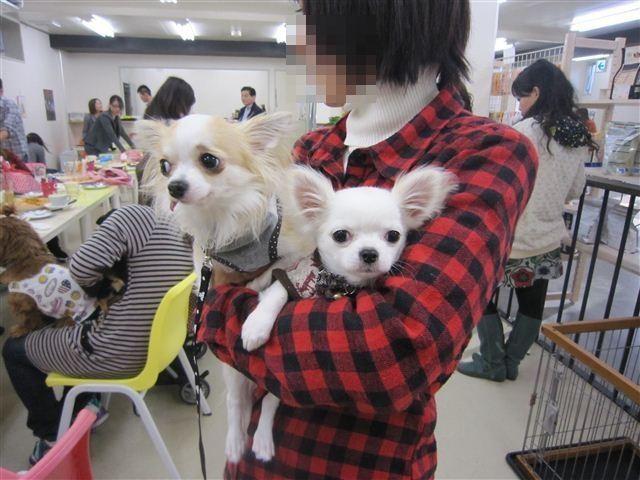 f:id:yasukazu01:20121202153750j:image