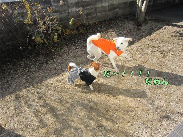 f:id:yasukazu01:20121211101918j:image