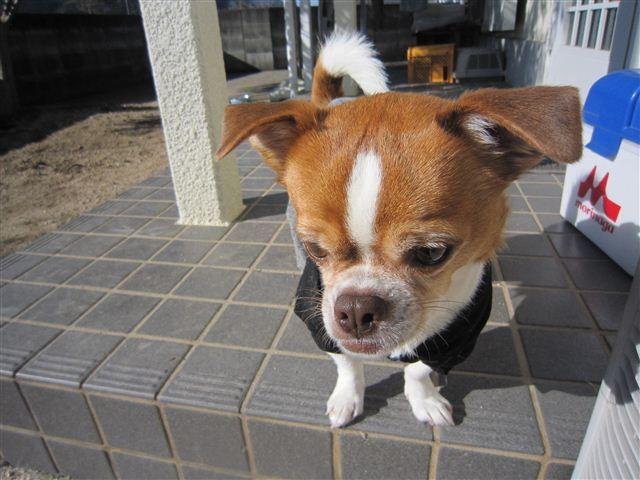 f:id:yasukazu01:20121211102427j:image