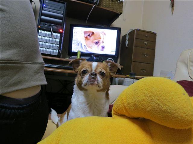 f:id:yasukazu01:20121215191655j:image