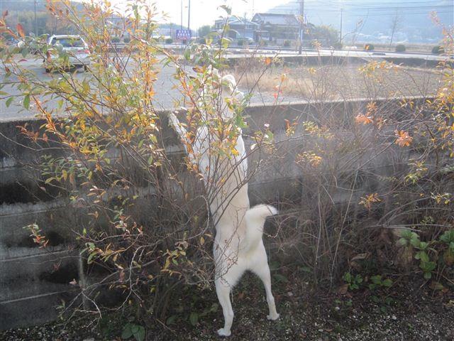 f:id:yasukazu01:20121216150257j:image
