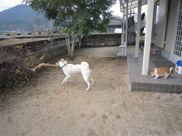 f:id:yasukazu01:20121223113804j:image